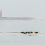 nr 19 - Fotowedstrijd Texel 2014 - Titel - Zeehonden voor De Cocksdorp - Fotograaf - Ad Witte