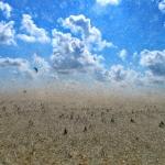nr 21 - Fotowedstrijd Texel 2014 - Titel - Strand in beweging - Fotograaf - Lammie Postmus