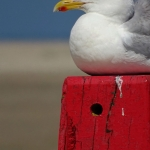 nr 23 - Fotowedstrijd Texel 2014 - Titel - Sereen .. - Fotograaf - Kerstin de Haan