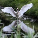 nr 6 - Fotowedstrijd Texel 2014 - Titel - De Landing - Fotograaf - Erwin Koning